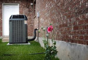 A photo of flowers with an outdoor AC unit in the background.